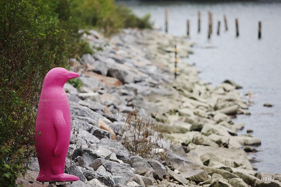 강가 핑크 펭귄