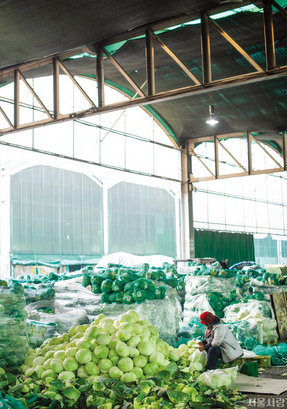 전국의 먹거리가 총집합하는 가락동농수산물종합도매시장