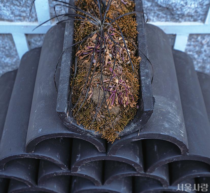 흙을 담아 골목의 화분이 된 검은 기와.