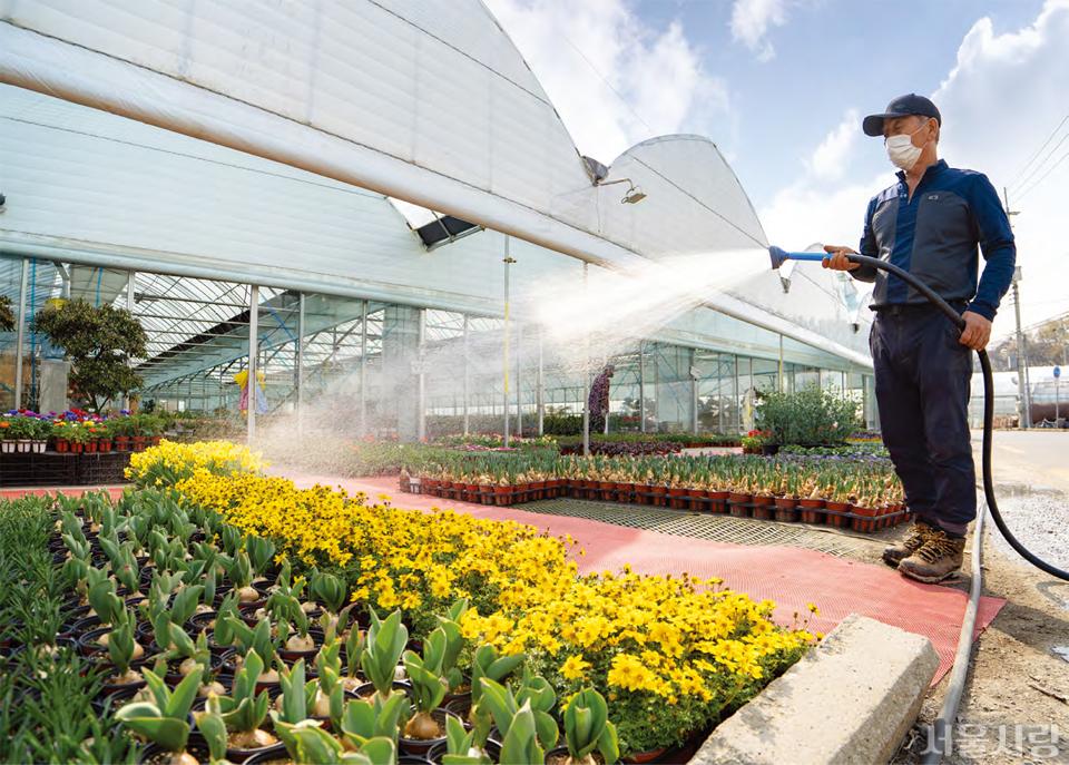 헌인화훼단지는 서울에서 가장 많은 꽃과 식물을 만날 수 있는 꽃 시장이다