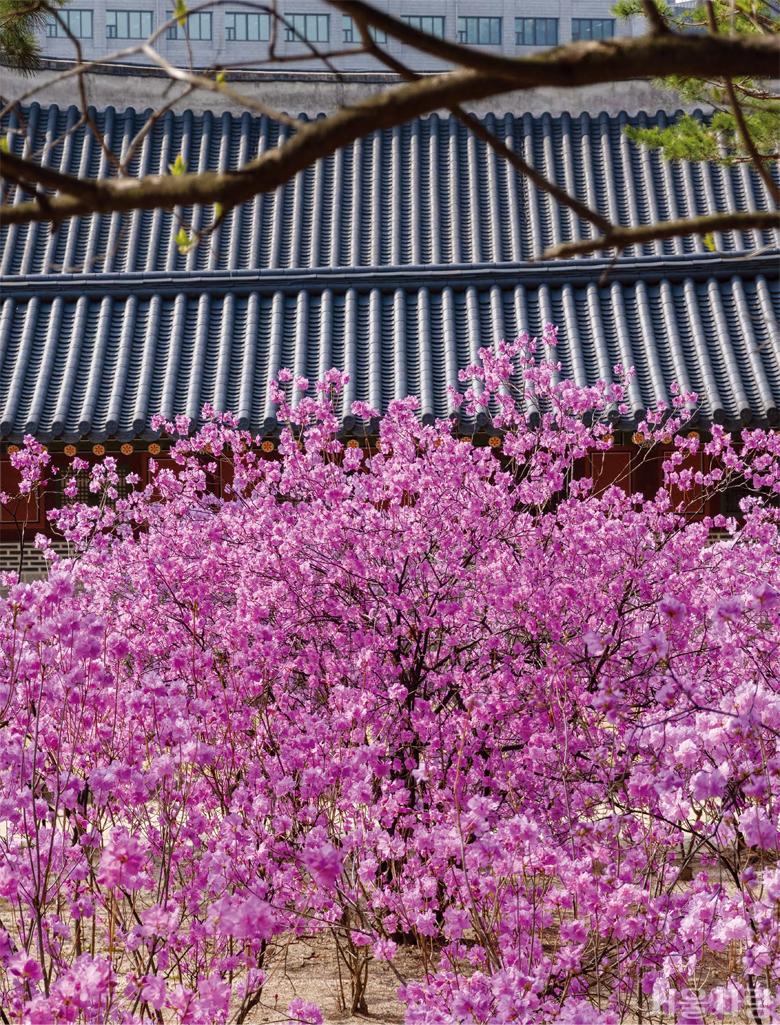 서울, 봄이 오나 봄