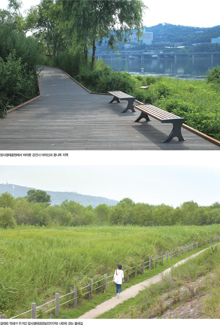 암시생태공원에서 바라본 강건너 아차산과 광나루 지역 갈대와 억새가 우거진 암시생태경관보전지구와 나란히 걷는 둘레길