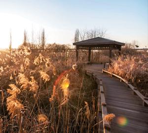 [서울둘레길 명소 ⑩]서울둘레길 7코스 봉산~앵봉산 구간 생태 숲과 억새밭 따라 걸으며 자연과 하나 되다