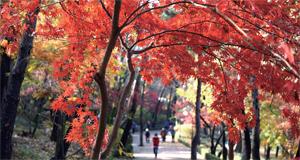 [다 같이 걷자] 알록달록 단풍이 손짓하는 서울둘레길(1~4코스)