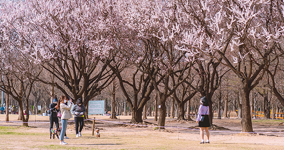[소셜 사진관] SNS에서 만나는 봄소식