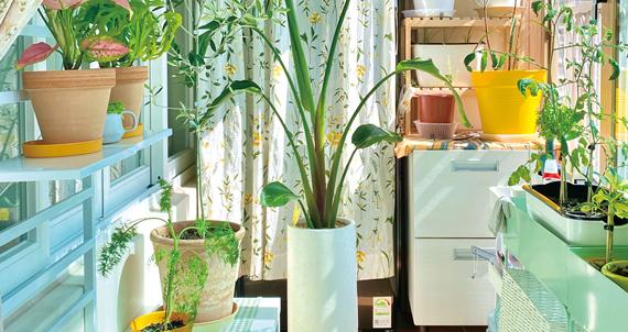 [집콕 배움터] 자급자족 식물 가꾸기