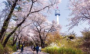 [나의 서울]서울 봄의 위로 그래도 봄은 오나 봄