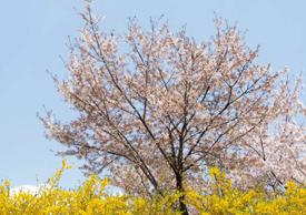마음속에 담는 서울의 봄