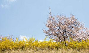 [서울 풍경] 마음속에 담는 서울의 봄