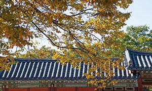 [서울 풍경] 가을, 궁을 만나다